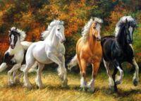 cvalajici kone