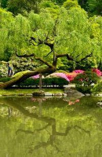 Reflections: Japanese tea garden, Seattle