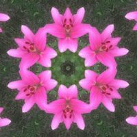 Kaleidoscope 51 just lilies very large