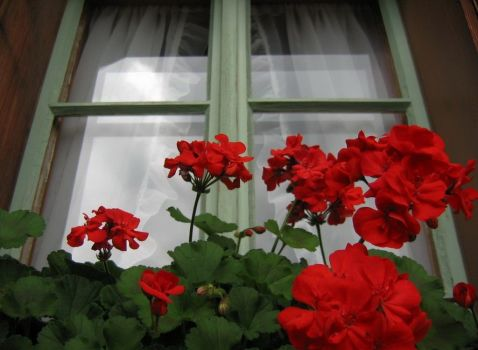 Window in Spain with red flowers