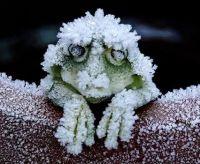 im cold