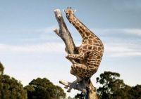 funny_giraffe_25[1]