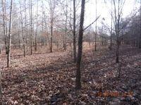 Stark winter woods.
