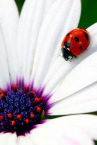 Lady Bug, Lady Bug fly away home!
