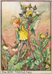 The Sow Thistle Fairy (smaller size)