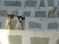Greek cats 3