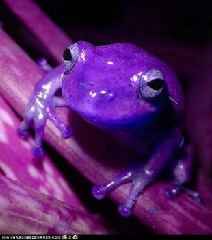 Robryan, this one's for you...for all the wonderful puzzles you give us! PS, I just love your frog pics!