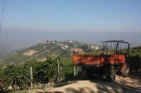 Wine harvest in Italy
