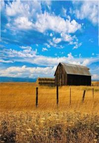 Old Barn In The Hay Field...
