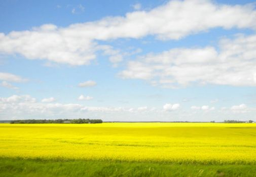 Wide Open Space With Yellow Field