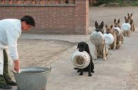 Lunchtime for police dogs.