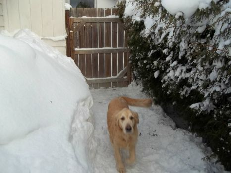 Charlie in back yard