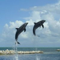 Dolphin Cove Grand Cayman