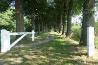 Lane with beeches, Landgoed Gossink, owned by Het Gelders Landschap
