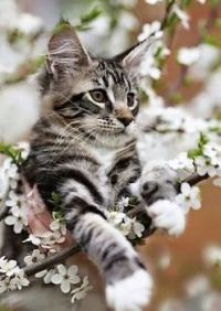 """Kitten Caboodle Series - """"Up In A Tree"""""""