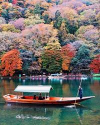 Nice tree colors