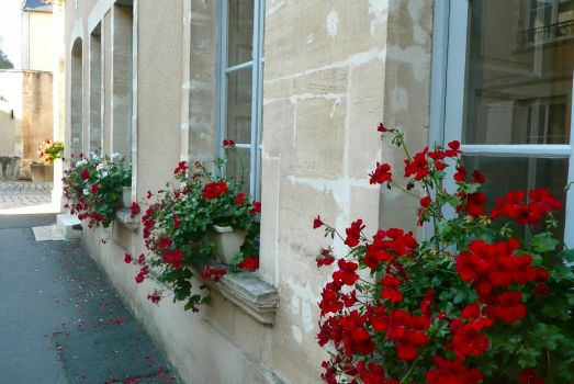 Colourful windowboxes, Bayeaux, France
