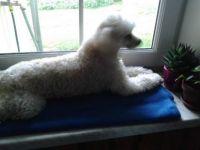 Maxík na okně