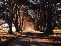 autumn trees-enjoy