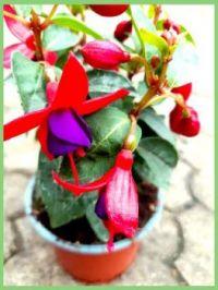 Květy---