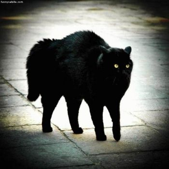 Big Black Cat