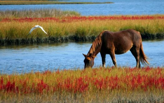 Horse Grazing by the Marsh