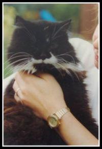 Animals - Cat - Tosca (3) 1996
