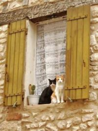 Cats in window of an old stone house,