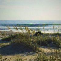 Sea Oats 2- Theme oceans