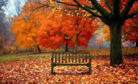 autumn-trees-
