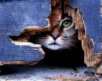 Cat eye