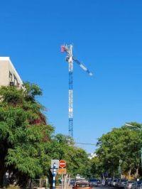 trees and crane
