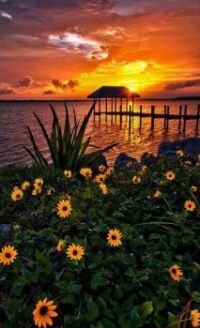 Sunset and Flower Scene.