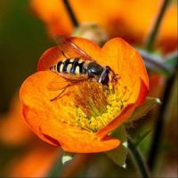 Where the Bee Lurks