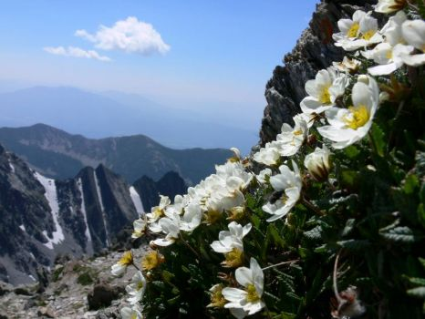 More Mountian Flowers on Fisher Peak B,C,