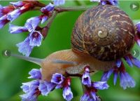 12 16 snail in flowers