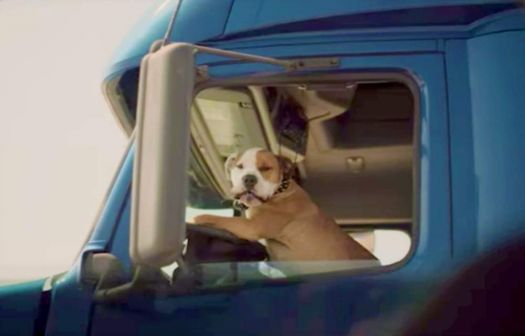 Truck driver dog gives puppy air horn salute - Subaru-dog-commercial