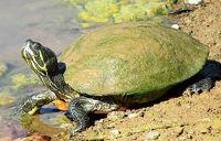 Turtle challenge!