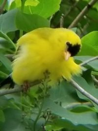Baby finch