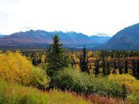 Trees of Alaska w/faraway glacier