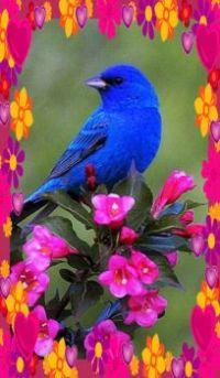 Bluebird in Blossoms