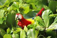 parrot-4003386_1280