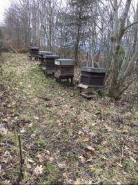 Theme Garden development Bee hives