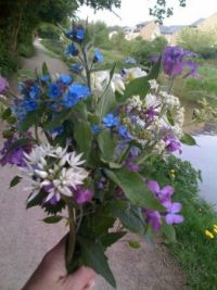 Wild flowers gathered along the canal, Yorkshire