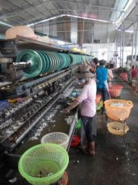 Silk production Vietnam. Spinning the thread.