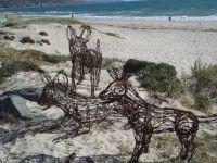 Dingos at the beach
