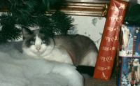 Cyclone our first diabetic cat