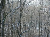 icy-trees-Kentucky-2013