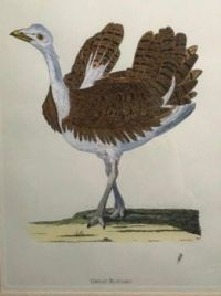 Great Bustard. At least I think  that's what they said