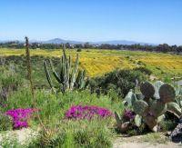 View from Balboa Park- Succulent Garden & Yellow Flower Bloom